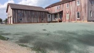 Day of seeding, dry to still wet.