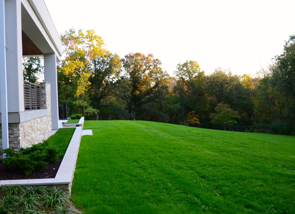 hydroseeding on lawn, sod on patio, five weeks after seeding.